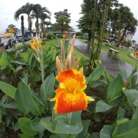 Fantastic flora