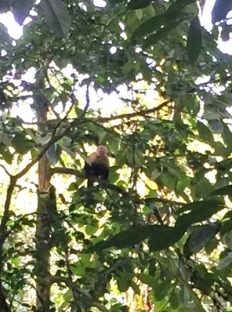 We saw capuchin monkeys!!