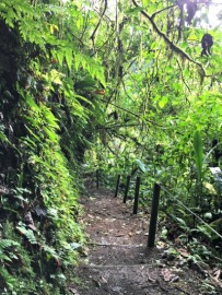 The path down to the waterfall.