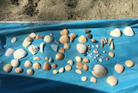 shellcollection