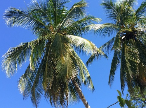 Costa Rica Trip, Day 14 – Our Final Day