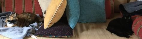 CouchCats